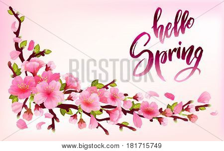 Branch of sakura or cherry blossom branch with blooming and leaves on light pink background. Cherry blossom japan spring design with callography hello spring. Vector illustration stock vector.