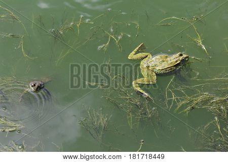 Mem humor - The lake frog quarreled and diverge