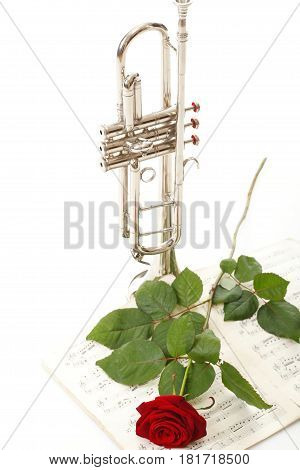 red rose and old note notes trumpet love music white background