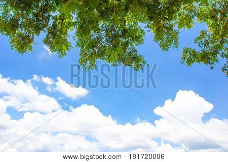 Abstract beautiful branch tree with bluesky background