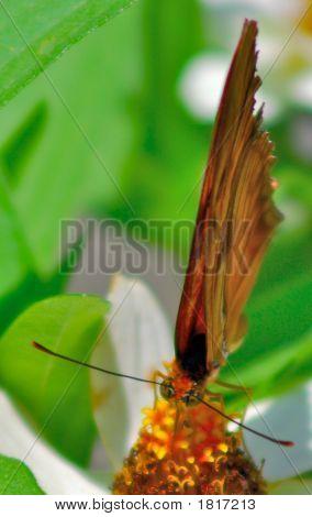 Butterflysummer20073