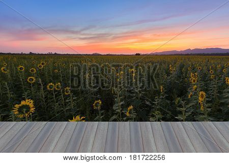 Opening wooden floor Beauty sunset sky over Sunflower field nautral landscape background