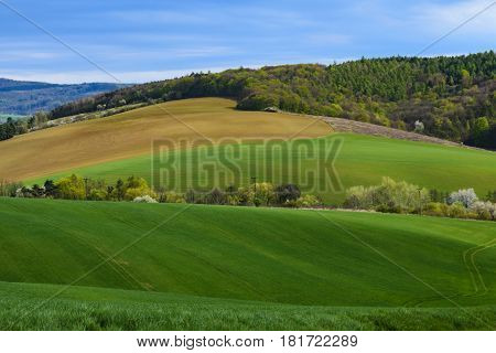 View on agricultural landscape with a field of young corn and forest under blue sky with clouds on a spring day in Czech Republic