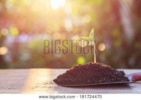 Young Beans Plant In Soil. Outdoor Shooting With Green Blur And Bokeh In Garden Background