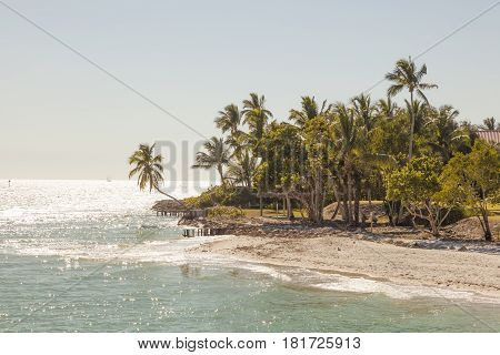 Tropical beach with coconut palm trees in the city of Naples Florida United States