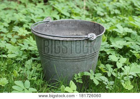 metal bucket for catching water among the green plants in the garden in spring