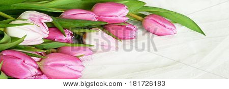 Pink tulip flowers on white tulle background. Top view. Flat lay.
