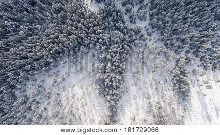 Snowy forest & ground aerial view of idyllic winter landscape