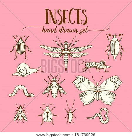 Insects set of hand drawn entomology elements in vintage style. Bugs vector illustration, doodle sketch of butterfly, ladybug, snail, grasshopper, worm and fly