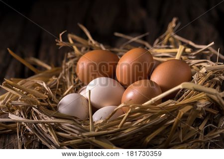 Chicken eggs in the straw in the morning light.