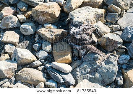 The corpse of a bird on the seaside on the rocks.