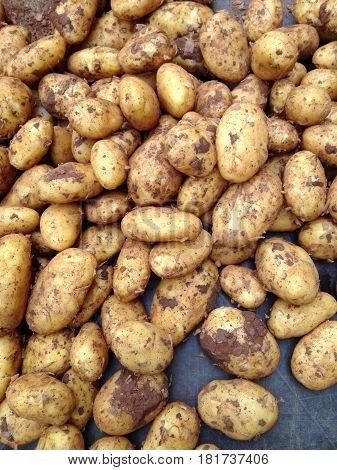 organic earthy potatoes at farmers market stall