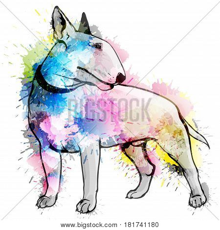 Bull terrier grunge illustration on a white background