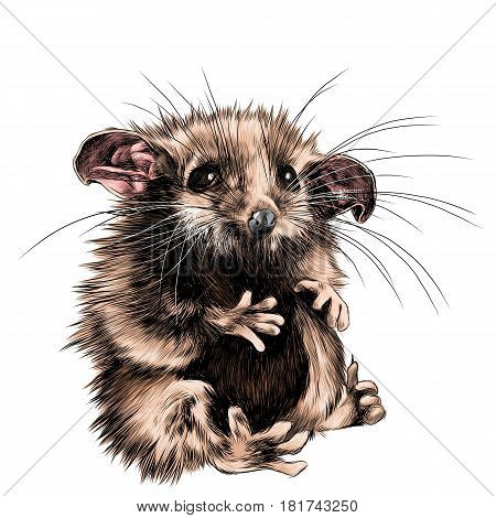 a possum sits a little cute funny sketch vector graphics color picture