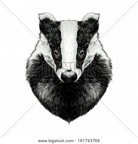 head badger symmetric sketch vector graphics color picture