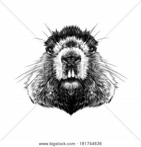 head Groundhog hairy symmetric sketch vector graphics black and white drawing