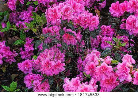 Illustrative image of pink  Azaleas on bush.