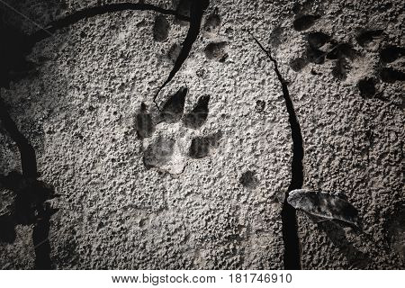Dog footprints at the cracked ground. Animal footmarks in dried land. Outdoor at the daytime. Nature background. Vignette style.