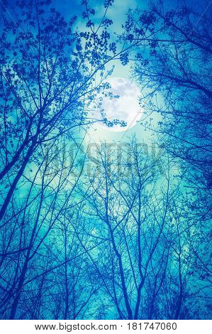 Silhouette of dry trees against night sky and full moon over tranquil green nature background. Outdoor at nighttime moonlight through branches.The moon were NOT furnished by NASA.