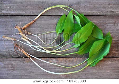 Wild garlic, ramson or bear garlic on wooden background