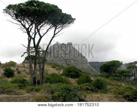 LANDSCAPE, TREE IN FORE GROUND, WITH MOUNTAIN AND CLOUDS IN THE BACK GROUND 19jjm