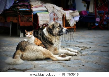 A cat lying on a dog. Photo of a good friendship and an incredible bond.
