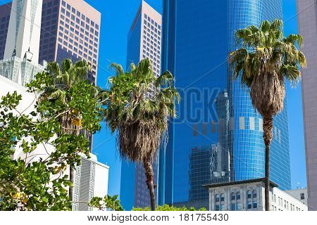 Multi-storey buildings and palm trees in Los Angeles