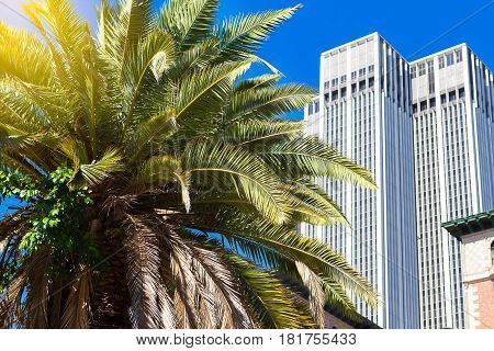 One large palm tree against a blue sky and a multi-storey building