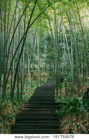 A Path And Stairway To Dense Bamboo Forest And Rainforest