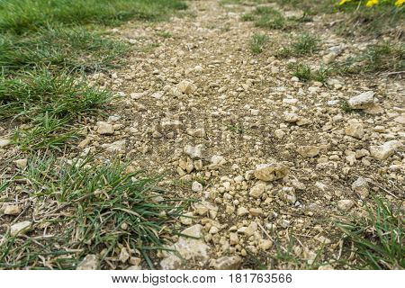 Stony Ground. Stones on a Filed. Green Grass on a stony underground