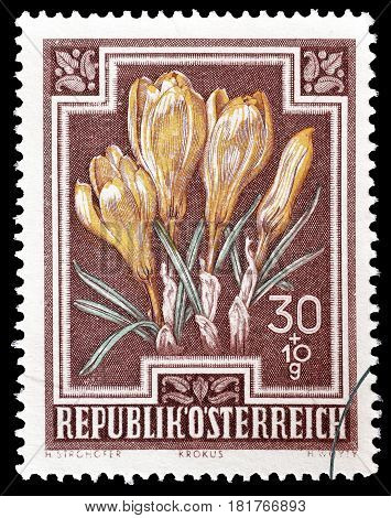 AUSTRIA - CIRCA 1948 : Cancelled postage stamp printed by Austria, that shows Spring Crocus.