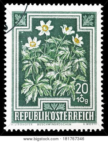 AUSTRIA - CIRCA 1948 : Cancelled postage stamp printed by Austria, that shows European Wood Anemone.
