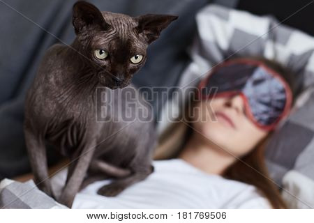 Don't disturb. Young lady is sleeping in her bad wearing eye mask. Her cat sphinx is on her chest ready to attack anyone who comes closer. Focus on cat. Human and animal concept.