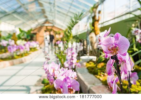 Orchidaceae growing in botanic garden. Green house providing suitable environment to tropical plants.