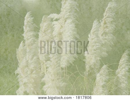 Pampas Grass On Vintage Texture