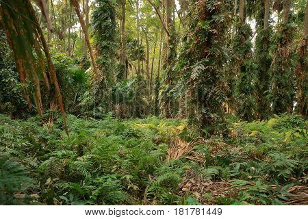 Peaceful outdoor scene - many wild woods is nature forest background Soft warm lighting and green forest in the morning. Green fresh natural in tranquility