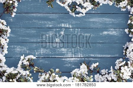 Flowering cherry branches on a blue wooden surface branches along the perimeter empty space in the middle
