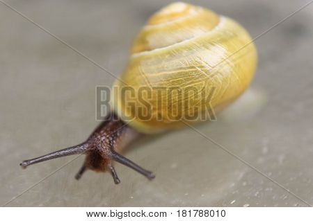 close up of snail, antennae and shell
