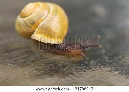 Close up of snail out of shell
