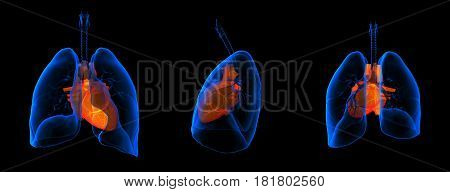 3D medical illustration - lungs with visible heart