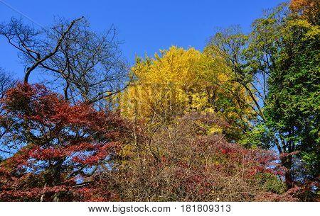 Autumn Scenery At The Japanese Garden