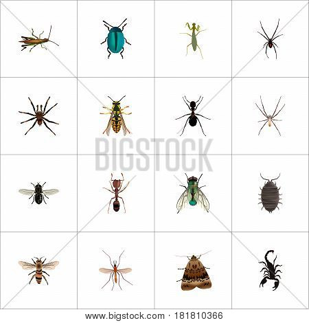 Realistic Locust, Housefly, Bee And Other Vector Elements. Set Of Animal Realistic Symbols Also Includes Spinner, Moth, Midge Objects.