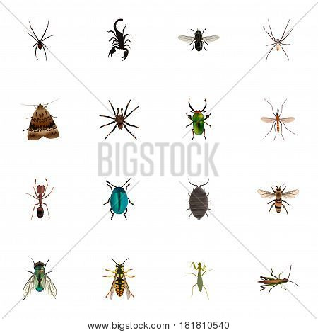 Realistic Emmet, Insect, Housefly And Other Vector Elements. Set Of Hexapod Realistic Symbols Also Includes Locust, Alive, Grasshopper Objects.