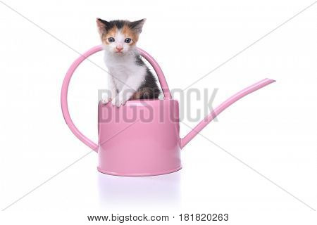 Adorable 3 week old Baby Kitten in a Garden Watering Can