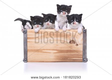 Cute Box of Kittens Up for Adoption