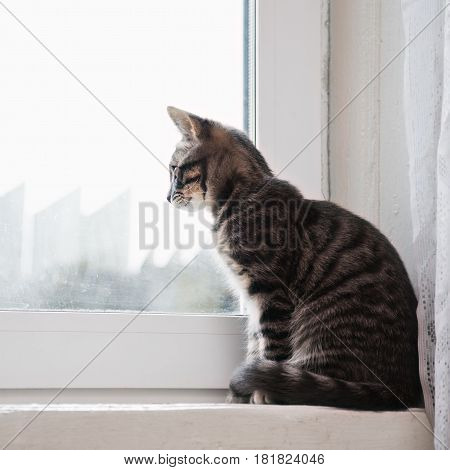 Cat sitting on windowsill and looking out the window.