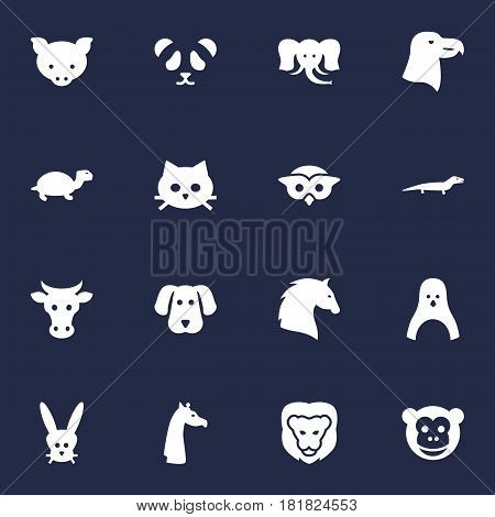 Set Of 16 Brute Icons Set.Collection Of Tortoise, Tortoise, King And Other Elements.