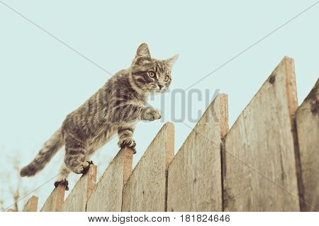 Tabby cat walking on the fence in the village.