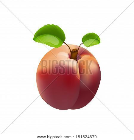 Vector nectarine isolated on a white background