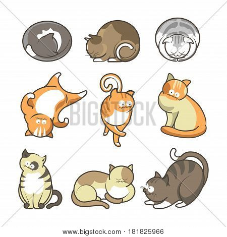 Cartoon cute cats in various positions collection on white. Vector colorful poster in flat design of orange, brown, grey and beige feline domestic animals while sleeping, playing walking and lying